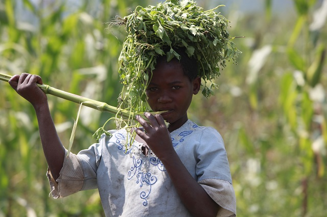 Child labour in DRC