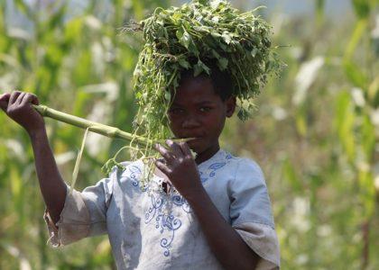 Travailler pour aller à l'école : une réalité pour Mave